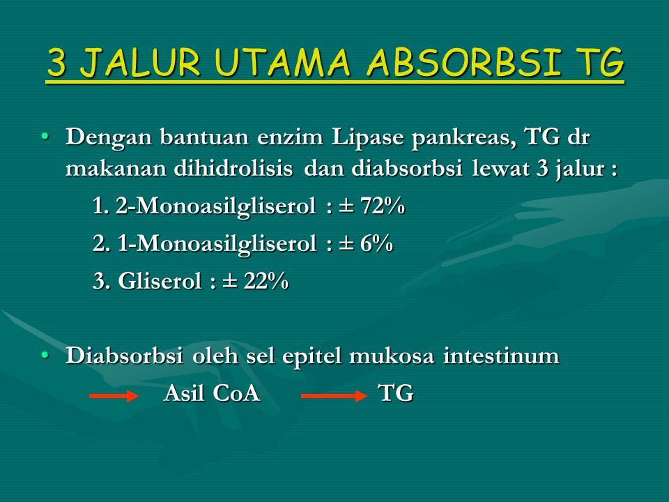 3 JALUR UTAMA ABSORBSI TG