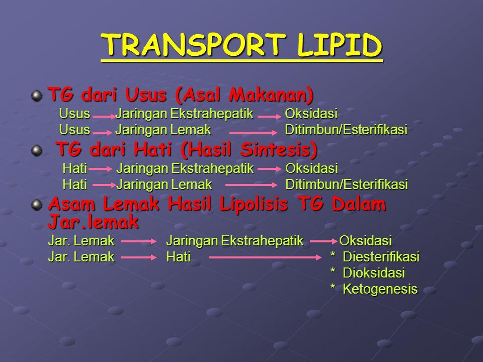 TRANSPORT LIPID TG dari Usus (Asal Makanan)