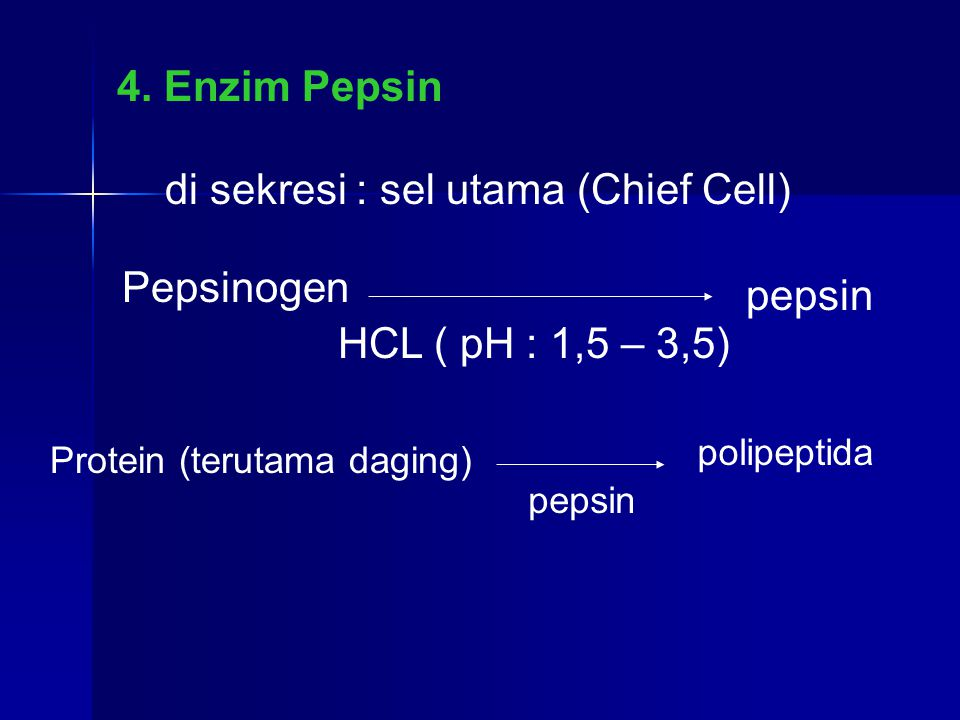 di sekresi : sel utama (Chief Cell)