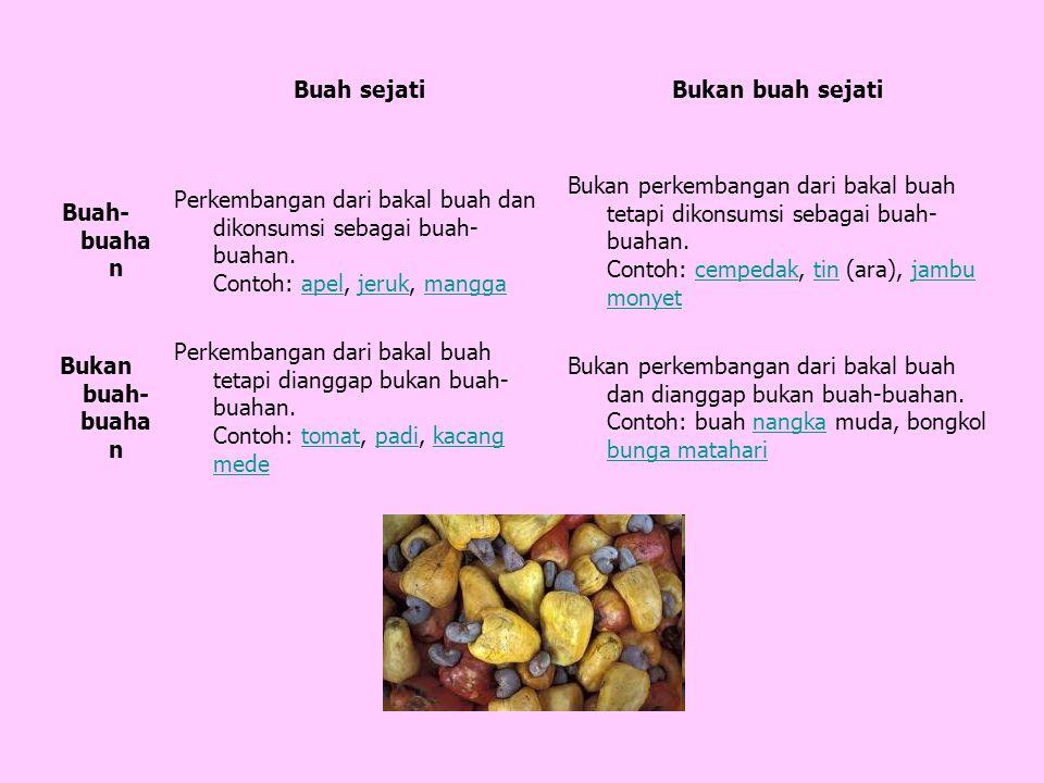 Buah sejati Bukan buah sejati. Buah-buahan. Perkembangan dari bakal buah dan dikonsumsi sebagai buah-buahan. Contoh: apel, jeruk, mangga.