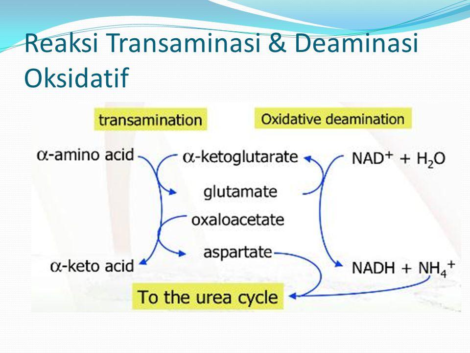 Reaksi Transaminasi & Deaminasi Oksidatif