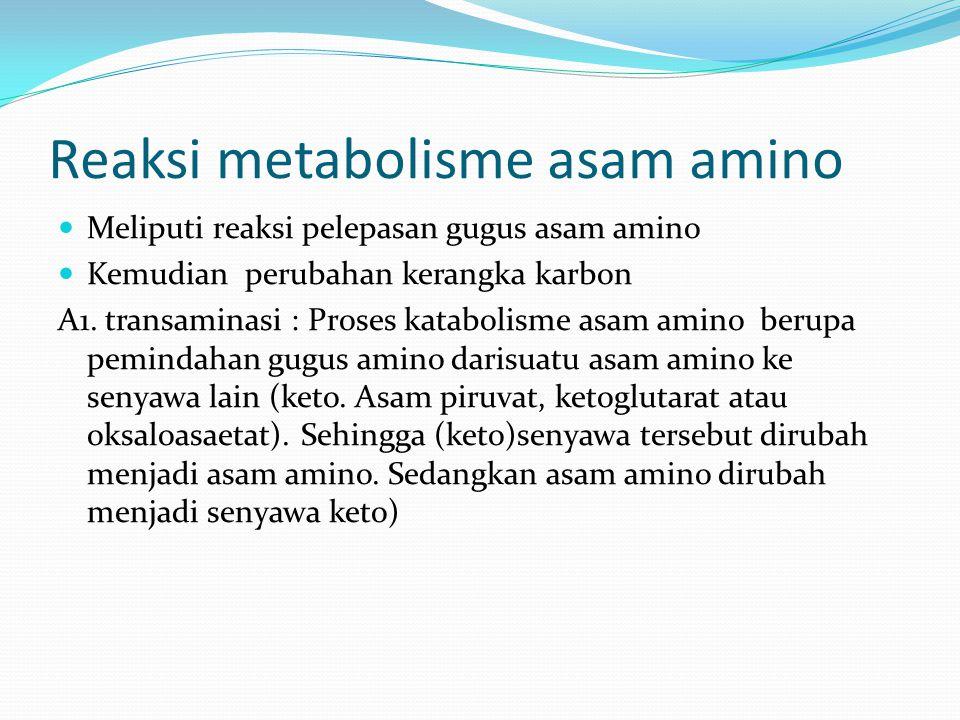 Reaksi metabolisme asam amino