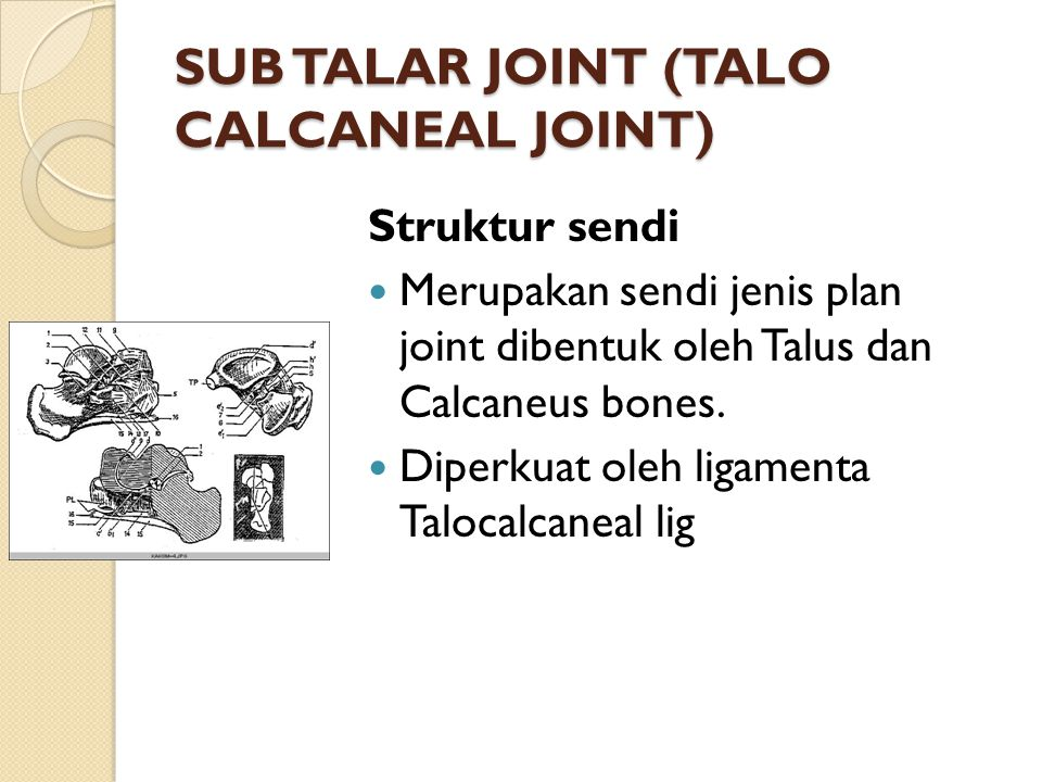 SUB TALAR JOINT (TALO CALCANEAL JOINT)