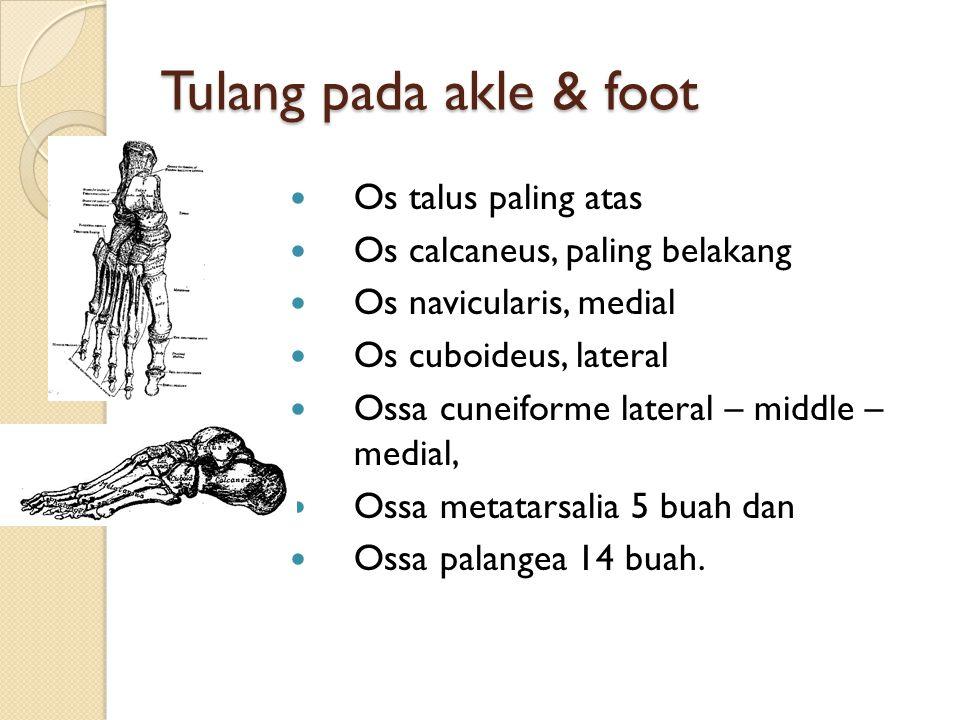 Tulang pada akle & foot Os talus paling atas