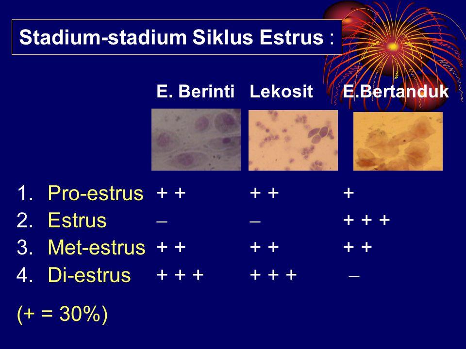 Stadium-stadium Siklus Estrus :