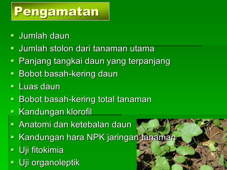 Pengamatan Jumlah daun Jumlah stolon dari tanaman utama