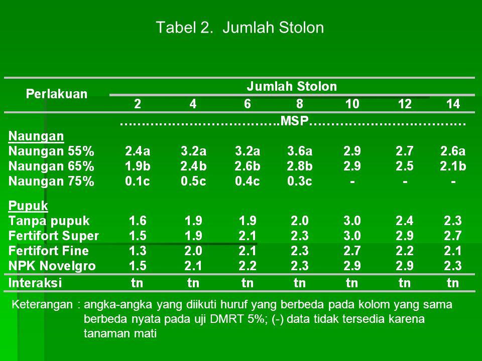 Tabel 2. Jumlah Stolon