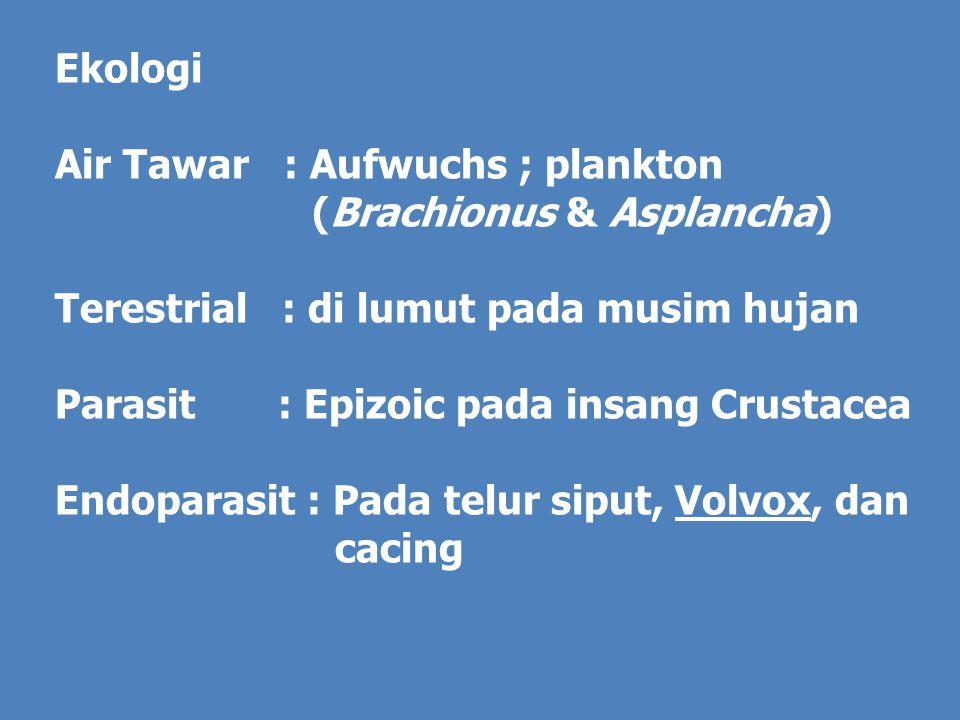 Ekologi Air Tawar : Aufwuchs ; plankton. (Brachionus & Asplancha) Terestrial : di lumut pada musim hujan.
