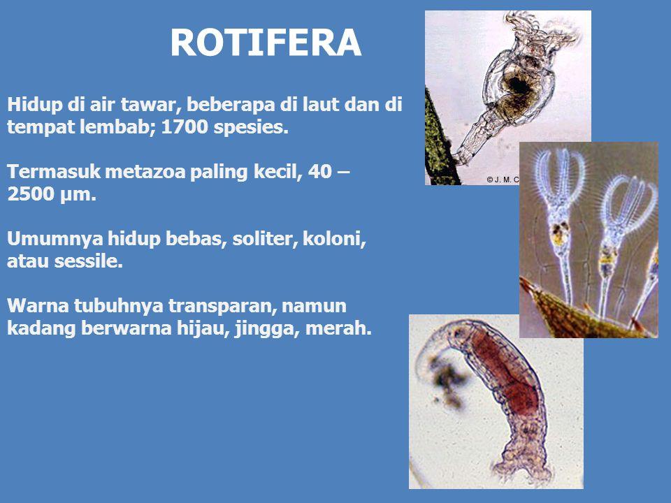 ROTIFERA Hidup di air tawar, beberapa di laut dan di