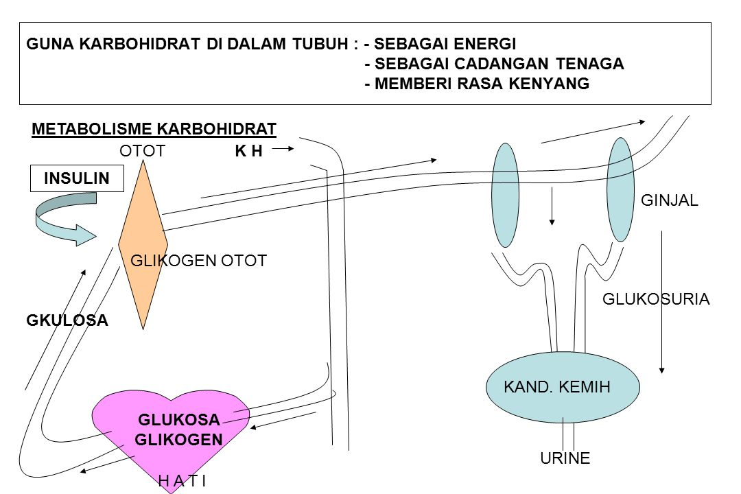 GUNA KARBOHIDRAT DI DALAM TUBUH : - SEBAGAI ENERGI - SEBAGAI CADANGAN TENAGA - MEMBERI RASA KENYANG