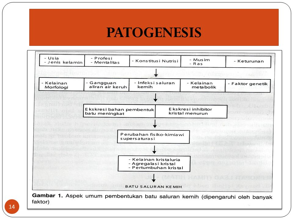 PATOGENESIS