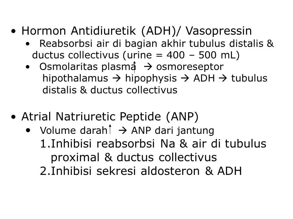Hormon Antidiuretik (ADH)/ Vasopressin