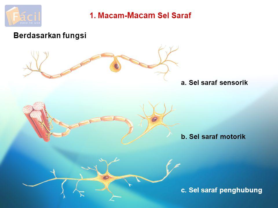 1. Macam-Macam Sel Saraf Berdasarkan fungsi a. Sel saraf sensorik