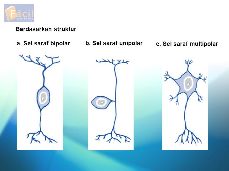 Berdasarkan struktur a. Sel saraf bipolar b. Sel saraf unipolar c. Sel saraf multipolar