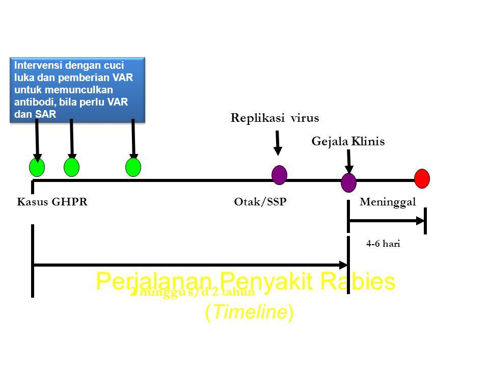 Perjalanan Penyakit Rabies (Timeline)