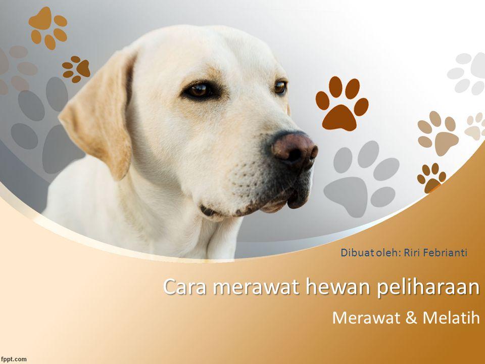Cara merawat hewan peliharaan