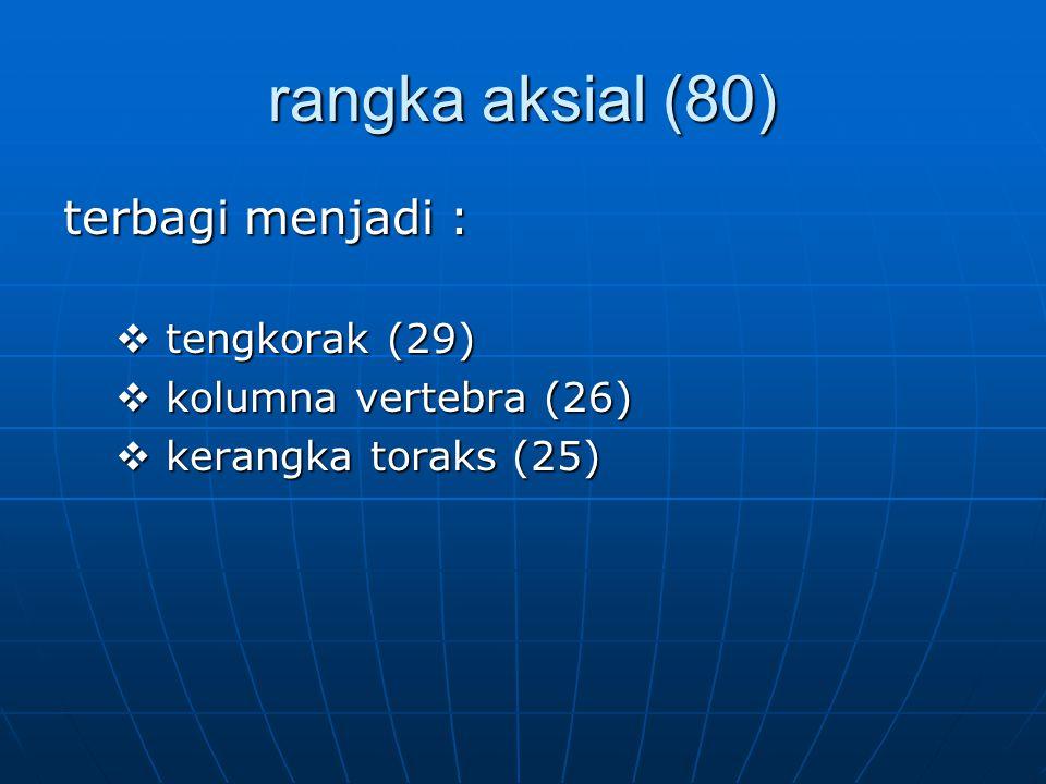 rangka aksial (80) terbagi menjadi : tengkorak (29)