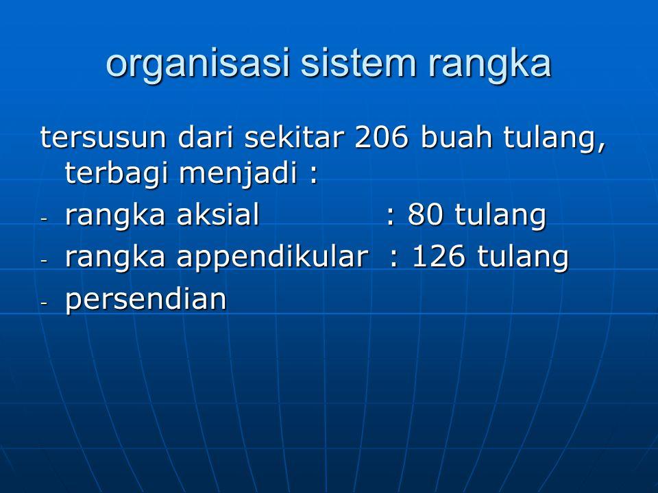 organisasi sistem rangka