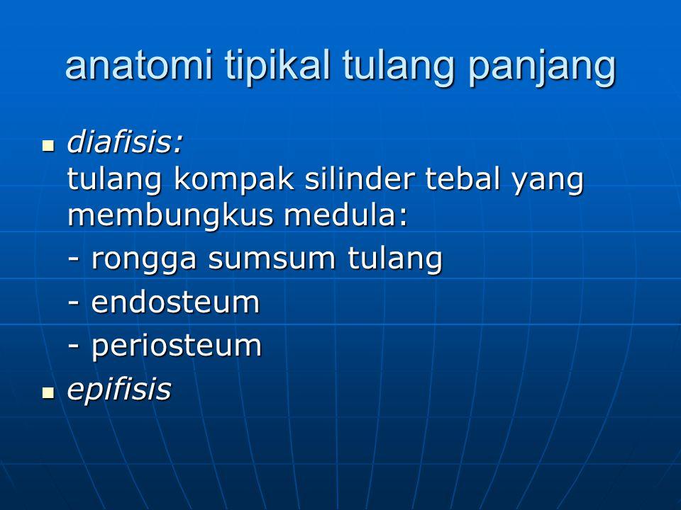 anatomi tipikal tulang panjang