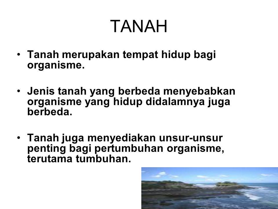 TANAH Tanah merupakan tempat hidup bagi organisme.