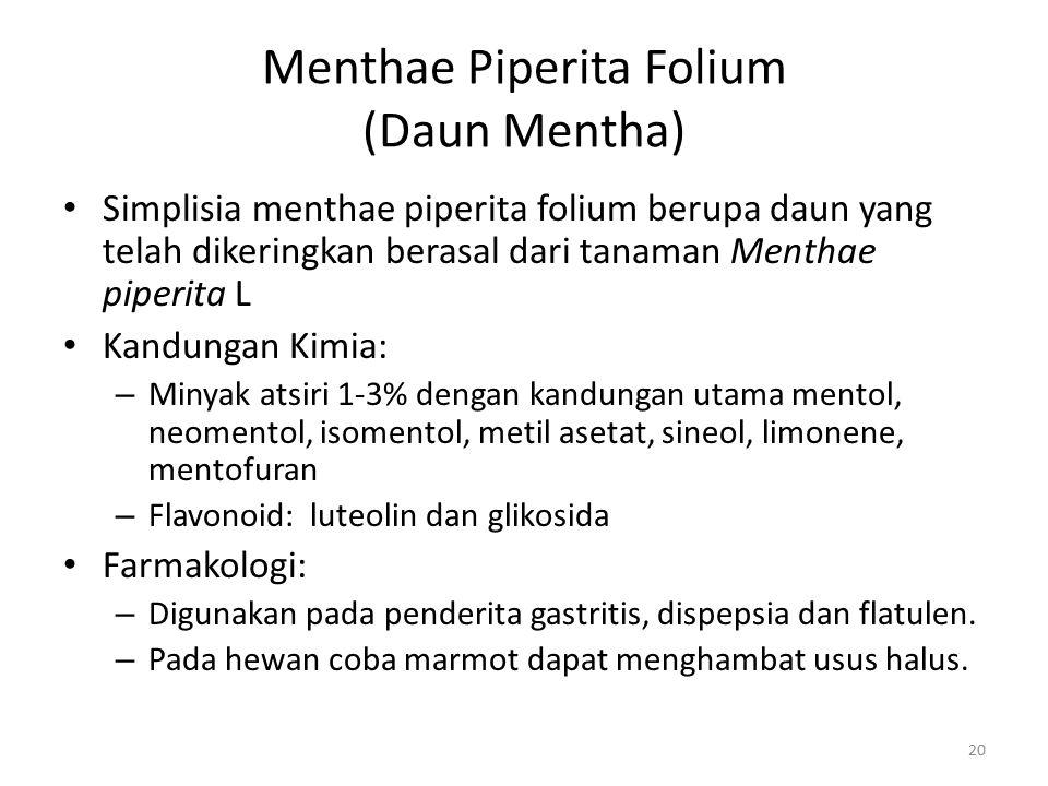 Menthae Piperita Folium (Daun Mentha)