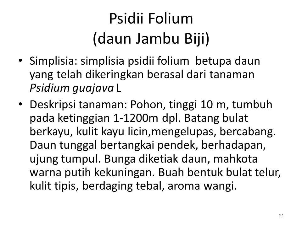 Psidii Folium (daun Jambu Biji)