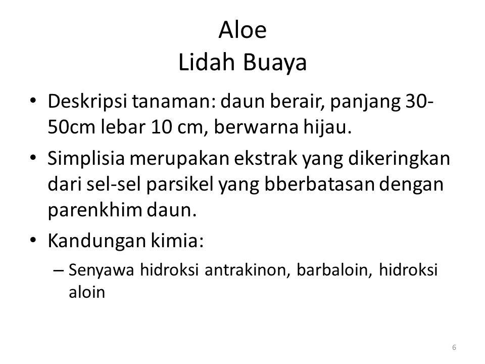 Aloe Lidah Buaya Deskripsi tanaman: daun berair, panjang 30-50cm lebar 10 cm, berwarna hijau.