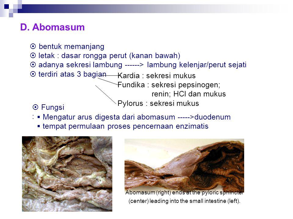 D. Abomasum