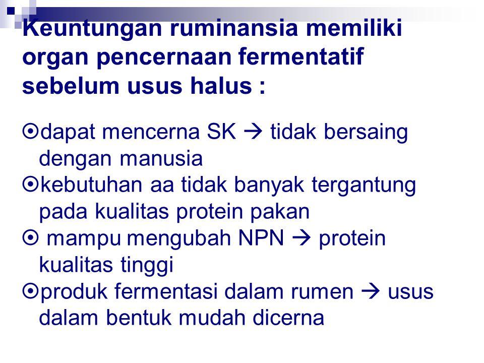 Keuntungan ruminansia memiliki organ pencernaan fermentatif sebelum usus halus :