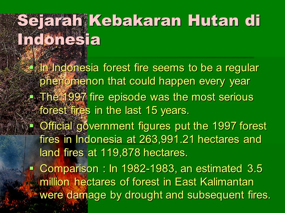 Sejarah Kebakaran Hutan di Indonesia