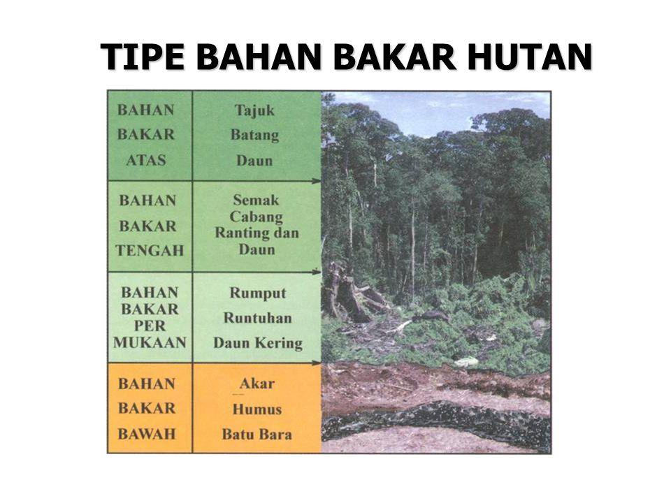 TIPE BAHAN BAKAR HUTAN