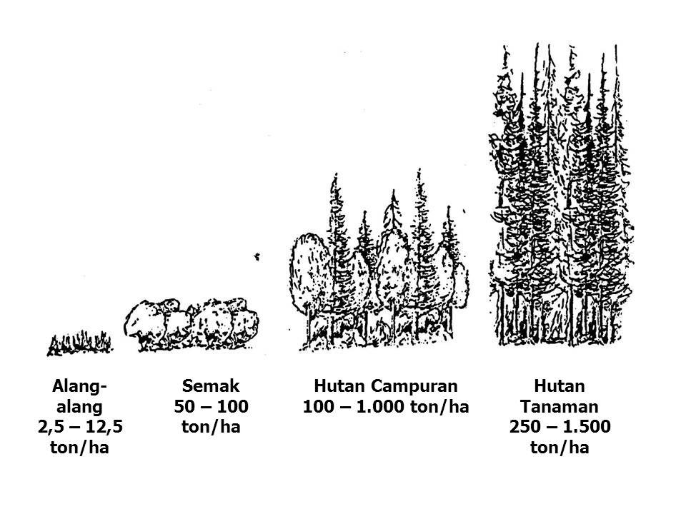 Alang-alang 2,5 – 12,5 ton/ha. Semak. 50 – 100 ton/ha. Hutan Campuran. 100 – 1.000 ton/ha. Hutan Tanaman.