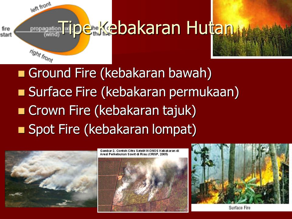 Tipe Kebakaran Hutan Ground Fire (kebakaran bawah)