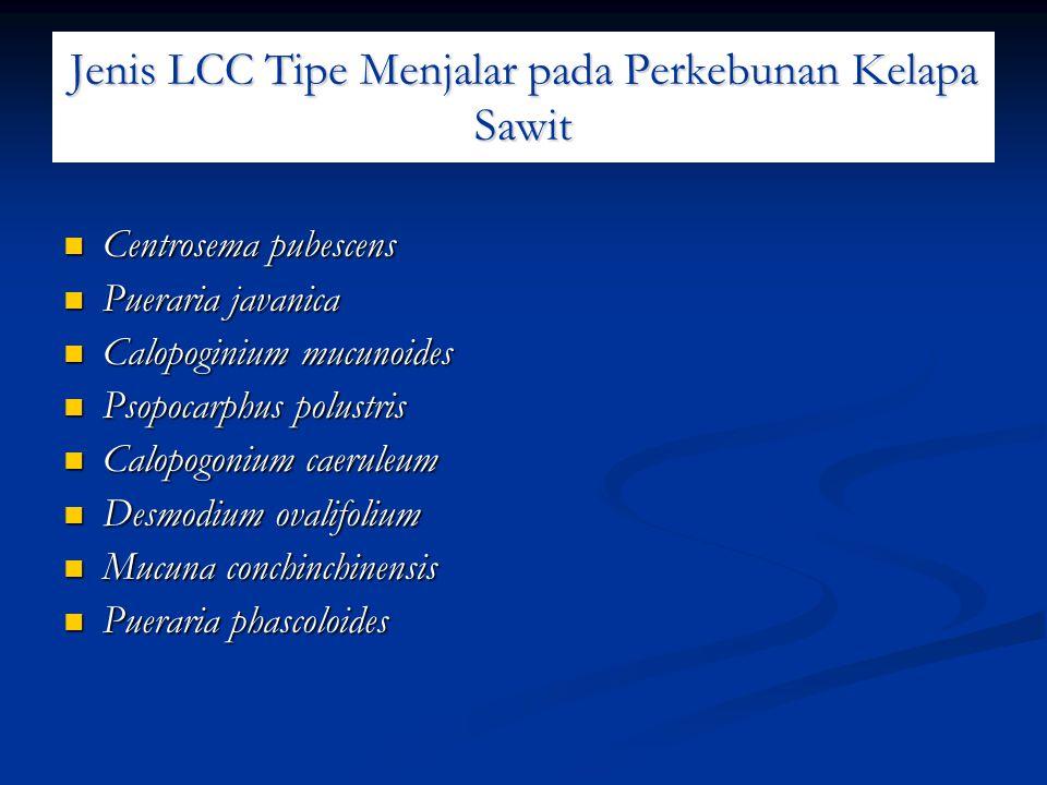 Jenis LCC Tipe Menjalar pada Perkebunan Kelapa Sawit