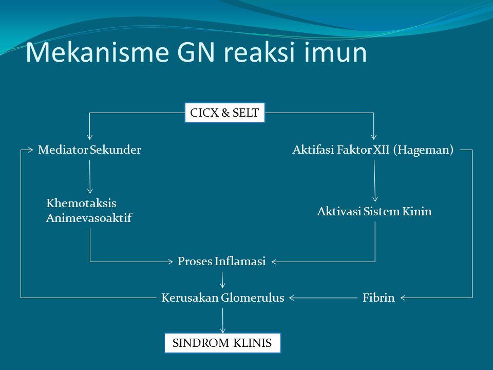 Mekanisme GN reaksi imun