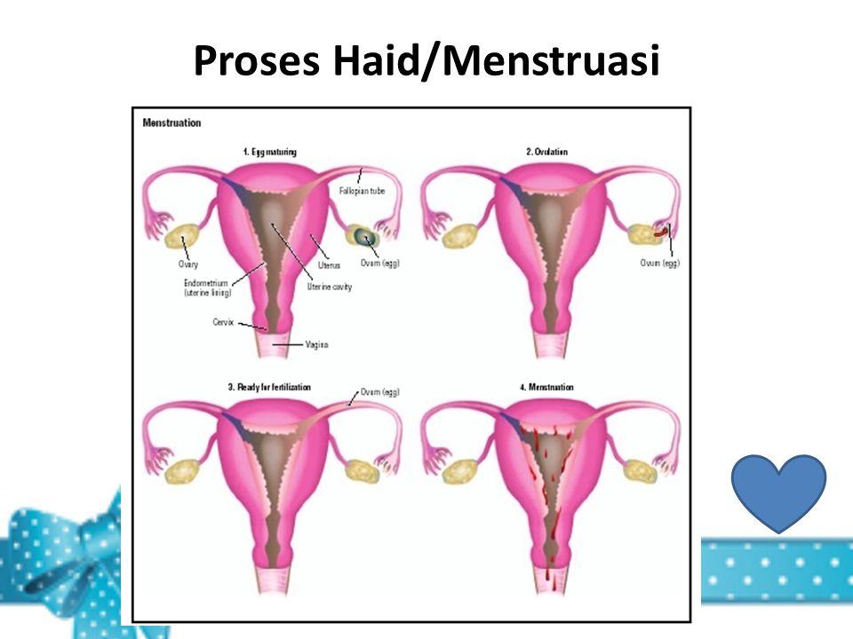 Proses Haid/Menstruasi