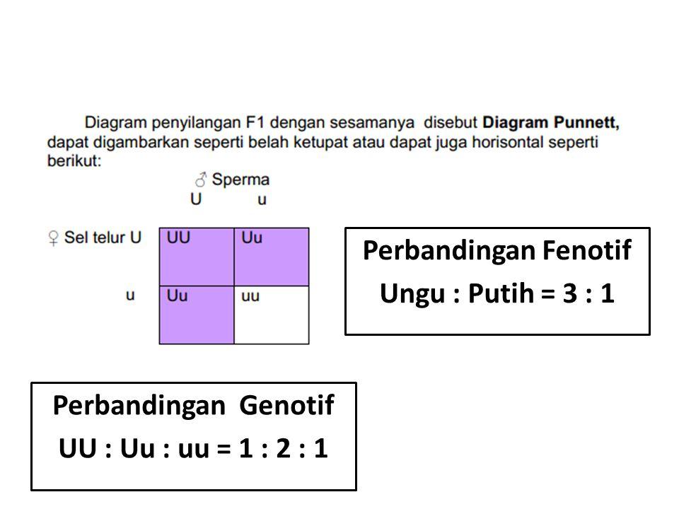 Perbandingan Fenotif Ungu : Putih = 3 : 1