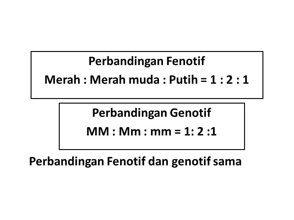Perbandingan Fenotif Merah : Merah muda : Putih = 1 : 2 : 1