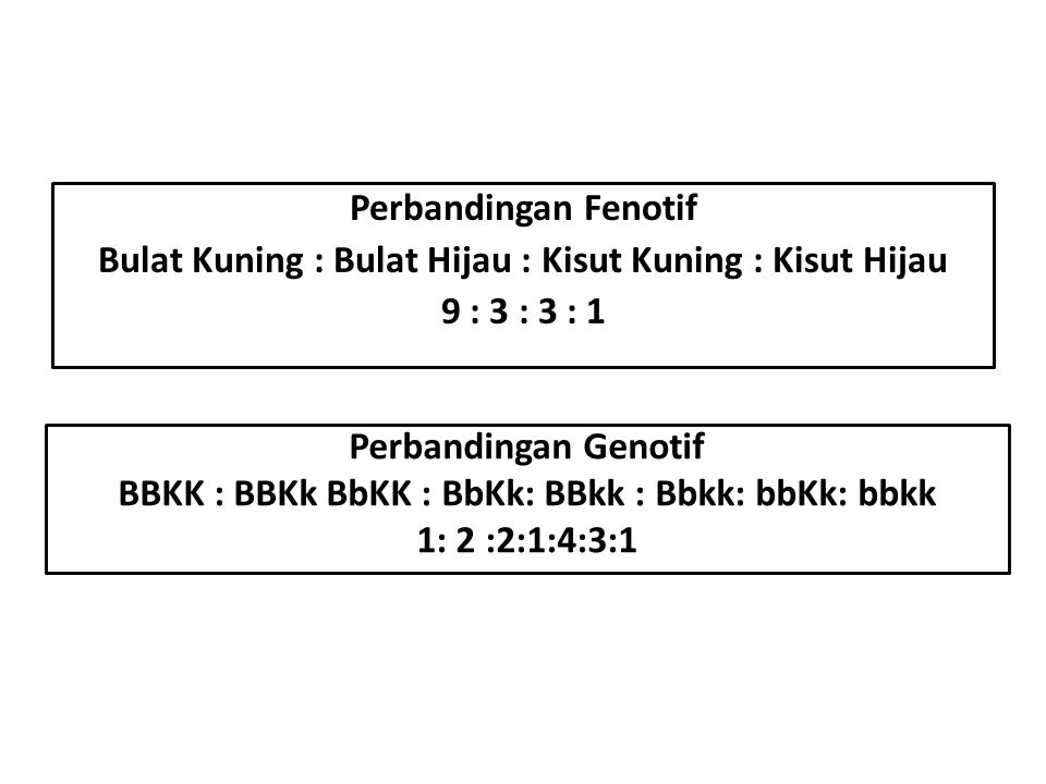BBKK : BBKk BbKK : BbKk: BBkk : Bbkk: bbKk: bbkk
