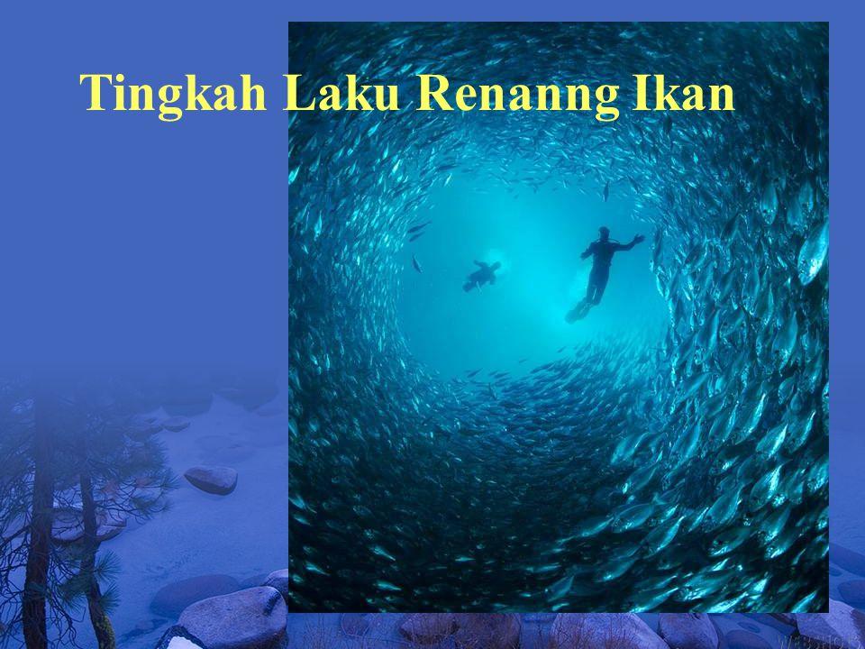 Tingkah Laku Renanng Ikan