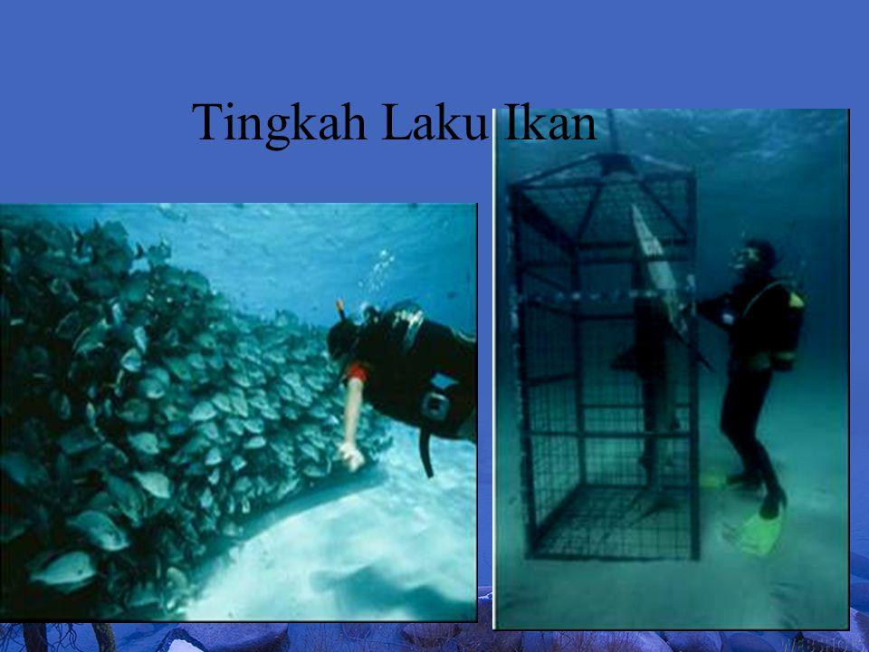 Tingkah Laku Ikan