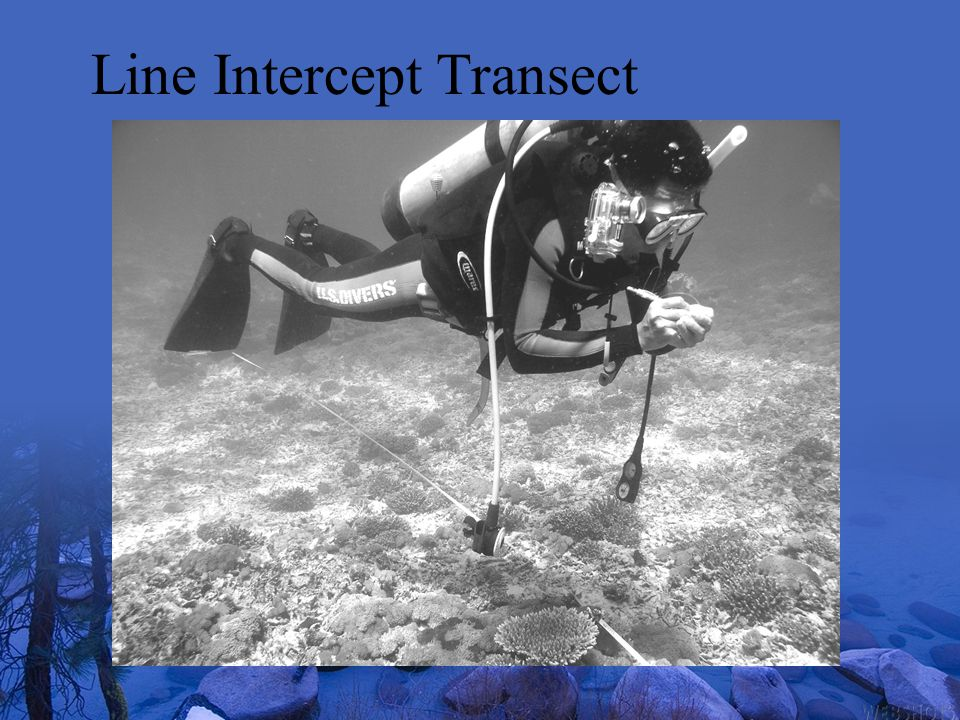 Line Intercept Transect