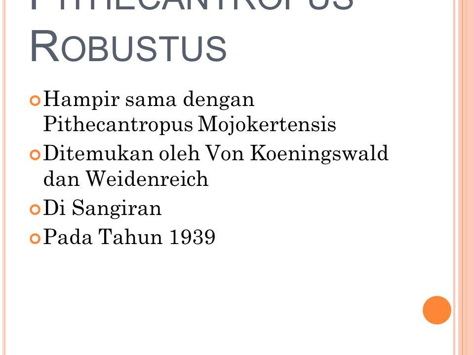 Pithecantropus Robustus