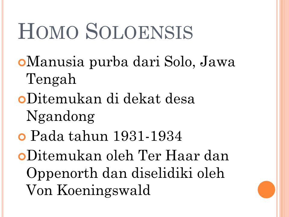 Homo Soloensis Manusia purba dari Solo, Jawa Tengah