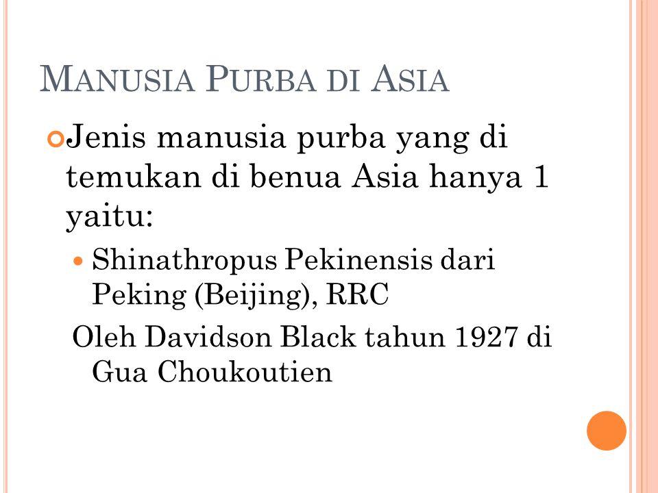 Manusia Purba di Asia Jenis manusia purba yang di temukan di benua Asia hanya 1 yaitu: Shinathropus Pekinensis dari Peking (Beijing), RRC.