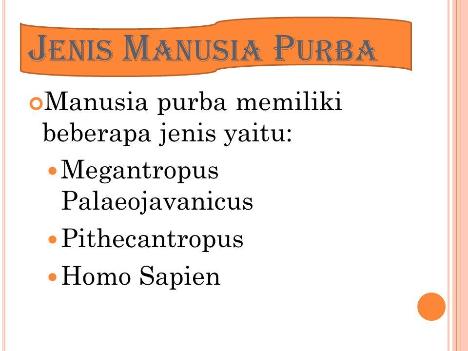 Jenis Manusia Purba Manusia purba memiliki beberapa jenis yaitu: