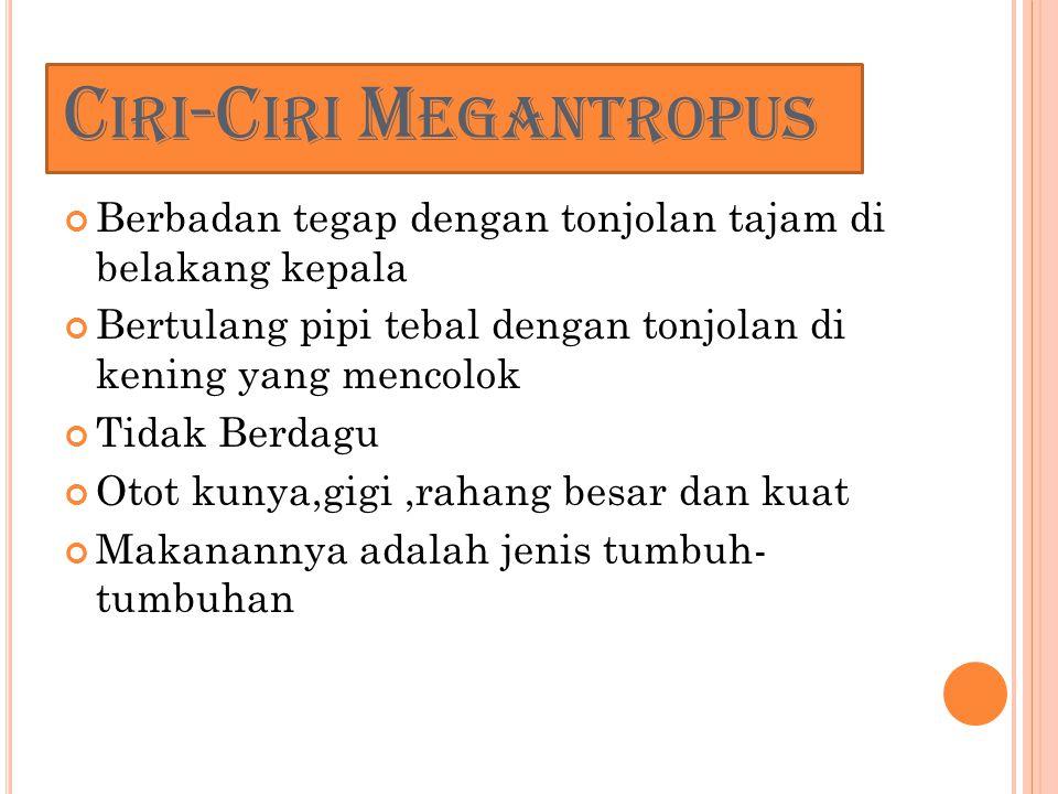 Ciri-Ciri Megantropus