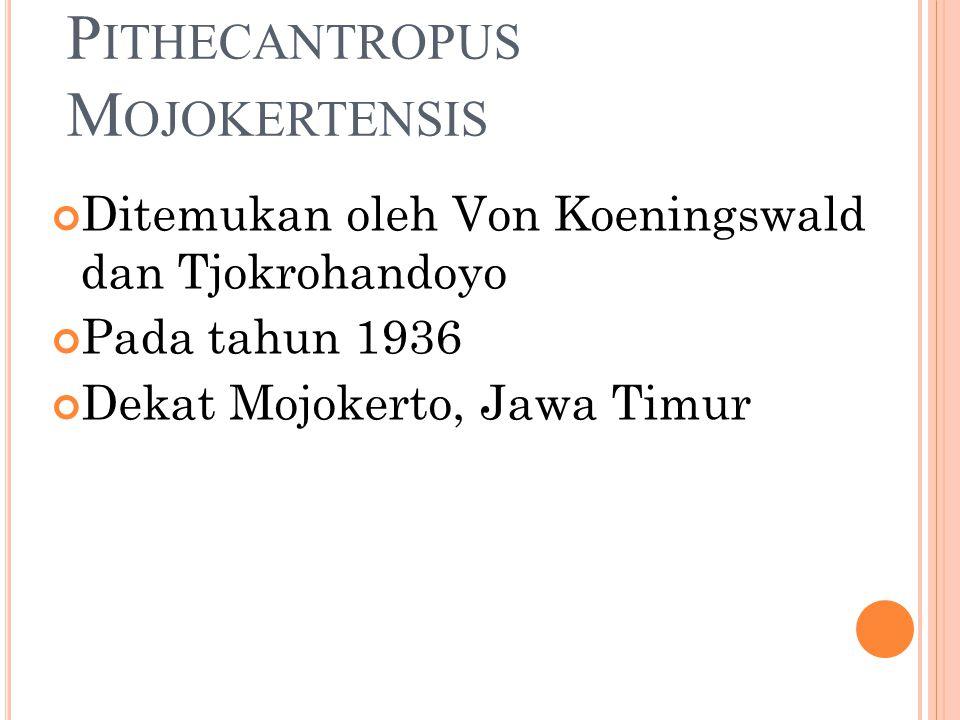 Pithecantropus Mojokertensis