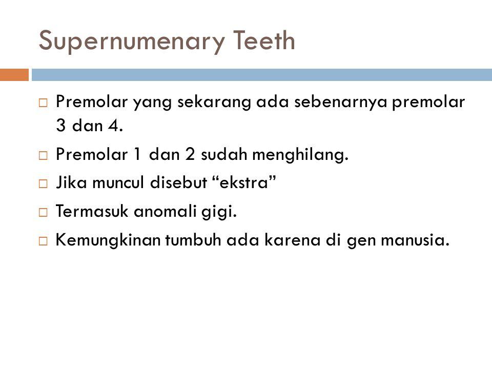 Supernumenary Teeth Premolar yang sekarang ada sebenarnya premolar 3 dan 4. Premolar 1 dan 2 sudah menghilang.