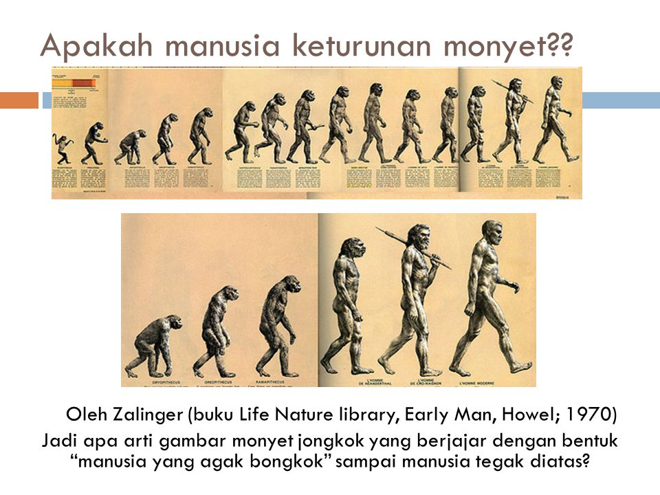 Apakah manusia keturunan monyet